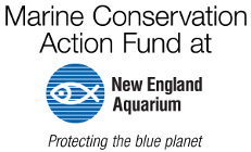 Marine Conservation Action Fund at New England Aquarium