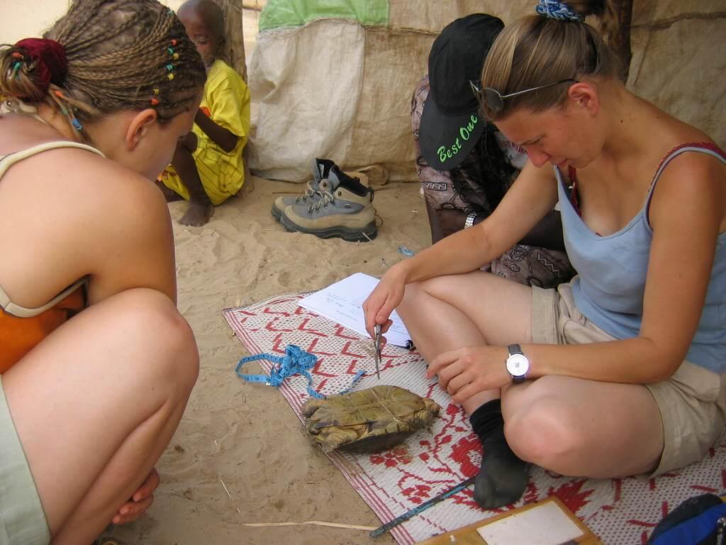 ACI volunteers taking biometric data on an adult female Pelusios adansonii
