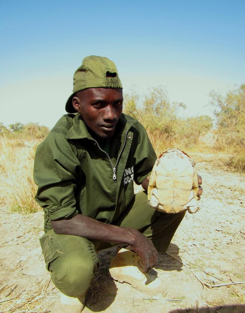 Eco-Guard Modou Doip holding a female Adanson's Terrapin at a nesting habitat in Tocc-Tocc Reserve