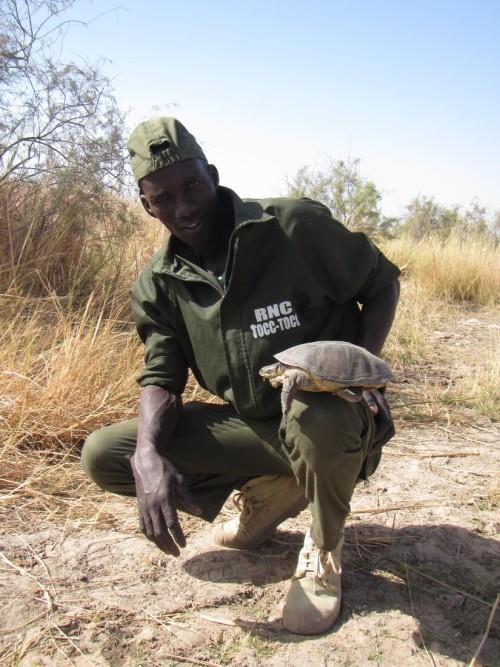 Eco-Guard Modou Diop with a female Adanson's Terrapin at nesting habitat in Tocc-Tocc Reserve