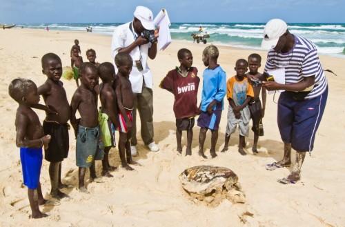 Outreach with kids around a dead Caretta caretta (Loggerhead Sea Turtle)